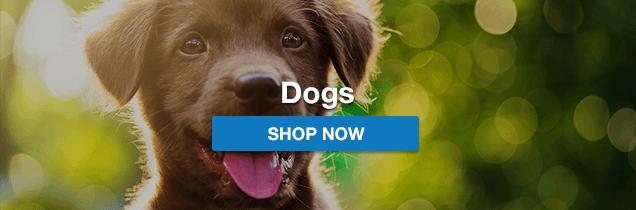 f255952032e Online Pet Store