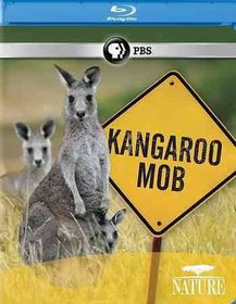 Nature:Kangaroo Mob - (Region A Import Blu-ray Disc)