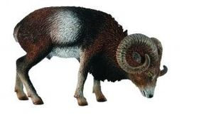 CollectA European Mouflon