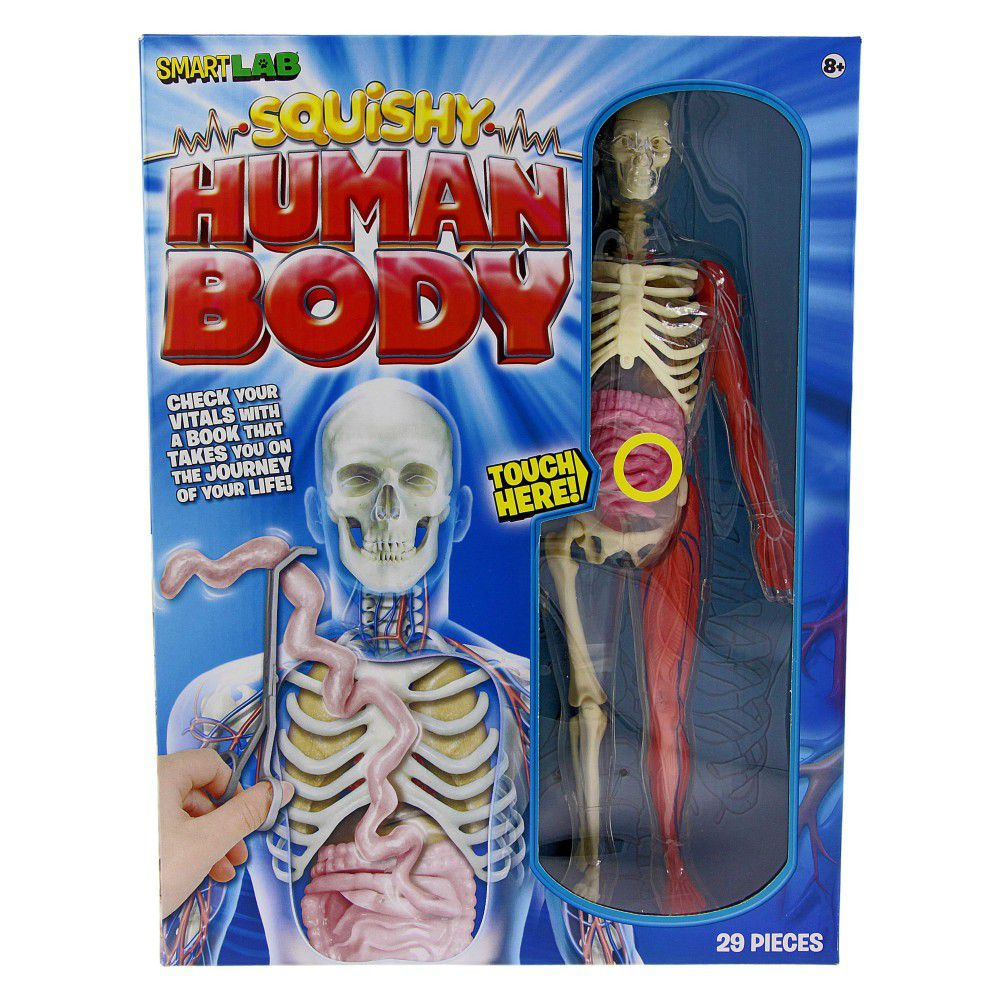 Smart Lab Squishy Human Body Buy Online in South Africa takealot.com