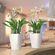 Lechuza - Deltini Table Planters - White Glossy