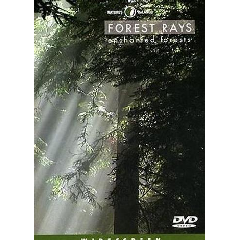 Forest Rays - (Region 1 Import DVD)