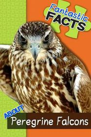 Fantastic Facts about Peregrine Falcons