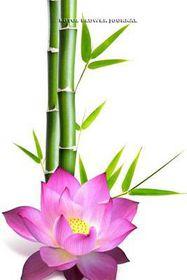 Lotus flower journal buy online in south africa takealot lotus flower journal mightylinksfo