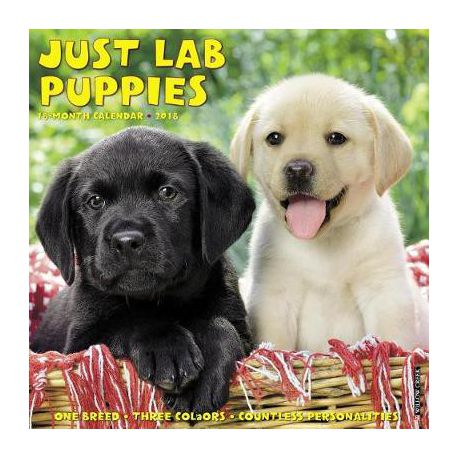 Just Lab Puppies 2018 Wall Calendar (Dog Breed Calendar)