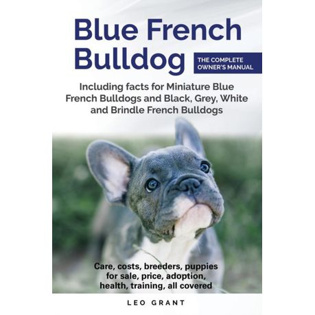 Blue French Bulldog: Care, Costs, Price, Adoption, Health, Training and How  to Find Breeders and Puppies for Sale
