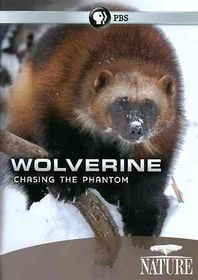 Nature:Wolverine Chasing the Phantom - (Region 1 Import DVD)