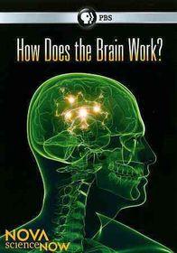 Nova:Sciencenow How Does the Brain Wo - (Region 1 Import DVD)