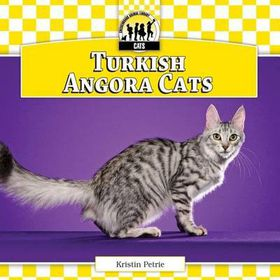 Buy angora cat