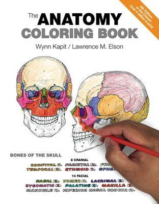The anatomy coloring book buy online in south africa takealot fandeluxe Images