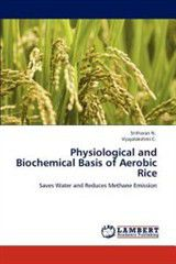 Physiological and Biochemical Basis of Aerobic Rice
