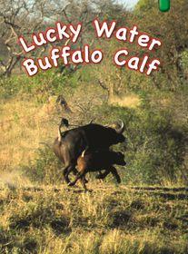 Key Links - Lucky Water Buffalo Calf   (Level 14)