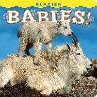 Glacier Babies!