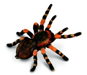 Collecta Insects-Mexican Redknee Tarantula-L