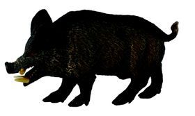Collecta Woodlands-Wild Boar -M