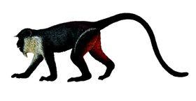 Collecta Wildlife-Diana Monkey-M