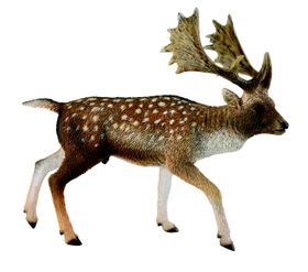 Collecta Woodlands-Fallow Deer Male-L