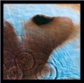 Pink Floyd - Meddie Framed Album Cover Print