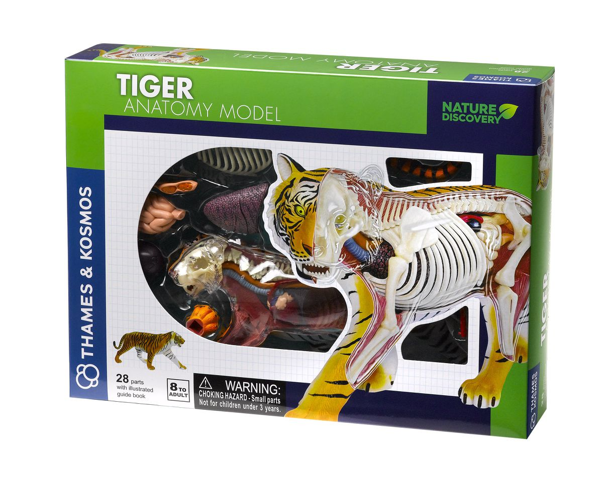 Nature Discovery - Animal Anatomy - Tiger | Buy Online in South ...