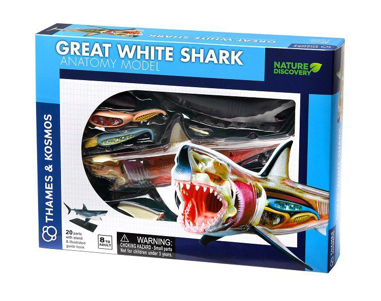 Nature Discovery - Animal Anatomy - Great White Shark   Buy Online ...