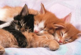 Educa Kittens - 500 Piece