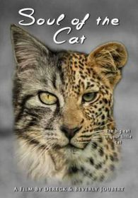 Soul of The Cat (DVD)
