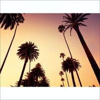 1Wall California Palm Trees Wall Mural - 4 Piece