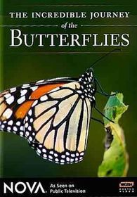 Incredible Journey of the Butterflies - (Region 1 Import DVD)