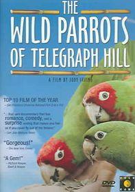 Wild Parrots of Telegraph Hill - (Region 1 Import DVD)