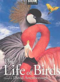 Life of Birds - (Region 1 Import DVD)