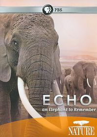 Nature:Echo Elephant to Remember - (Region 1 Import DVD)