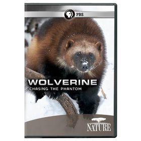 Nature:Wolverine Chasing the Phantom - (Region 1 Import DVD)