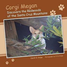 Corgi Megan Discovers the Redwoods of the Santa Cruz Mountains