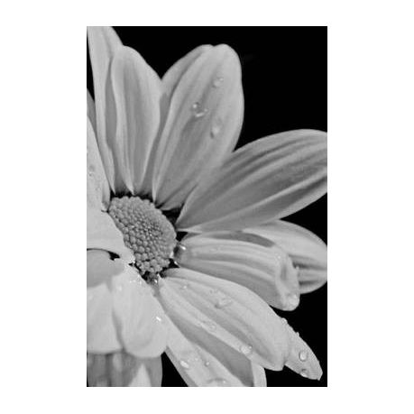 Mind Blowing Black And White Flower 200 Page Lined Journal Buy